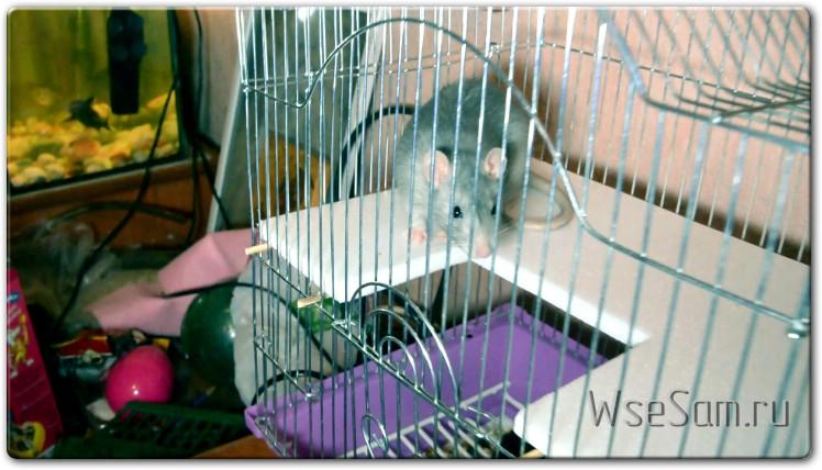 Изготовление второго этажа в клетку для крысы