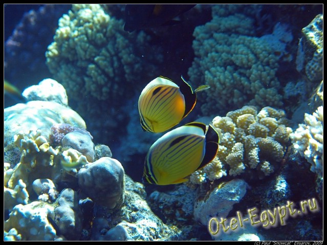 Подводный мир Красного моря